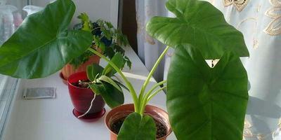 Как называются это растения?