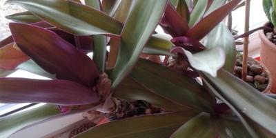 Подскажите, пожалуйста, названия этих растений