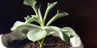 Пожалуйста, помогите определить названия растений