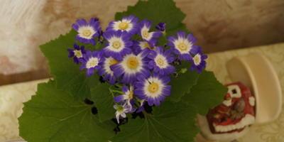 Что это за цветок и как за ним ухаживать?
