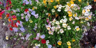 Пожалуйста, подскажите название этих цветов!