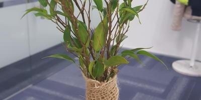 Подскажите название данного растения