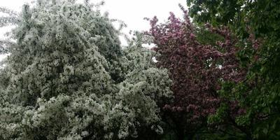 Помогите определить названия деревьев