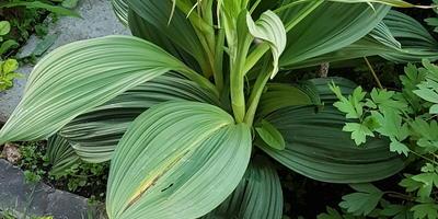 Подскажите, пожалуйста, название растения