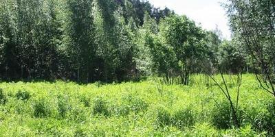Фотографии и отзывы о коттеджном поселке «Воронки» (Красногорский р-н МО)
