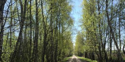 Фотографии и отзывы о коттеджном поселке «Березенки» (Чеховский р-н МО)