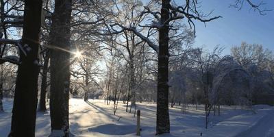 Фотографии и отзывы о коттеджном поселке «Николин Парк» (Ленинский р-н МО)