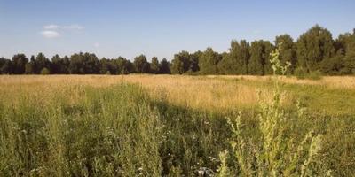 Фотографии и отзывы о коттеджном поселке «Морозко» (Раменский р-н МО)