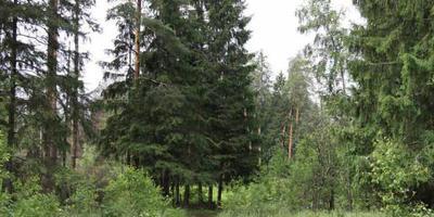 Фотографии и отзывы о коттеджном поселке «Прелестный» (Щелковский р-н МО)
