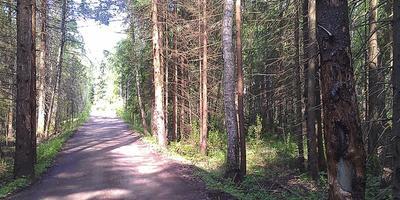 Фотографии и отзывы о коттеджном поселке «Морозов» (Солнечногорский р-н МО)