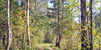 Фотографии и отзывы о коттеджном поселке «Марусин луг» (Люберецкий р-н МО)