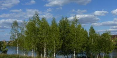 Фотографии и отзывы о коттеджном поселке «Времена года» (Серпуховский р-н МО)