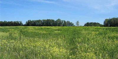 Фотографии и отзывы о коттеджном поселке «Клеверная дымка» (Ступинский р-н МО)