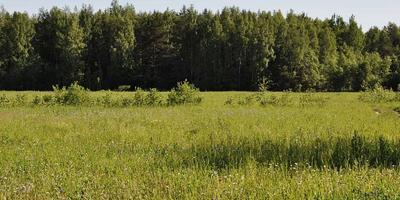 Фотографии и отзывы о коттеджном поселке «Радуга» (Сергиево-Посадский р-н МО)