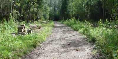 Фотографии и отзывы о коттеджном поселке «Фореста» (Мытищинский р-н МО)