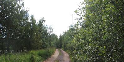 Фотографии и отзывы о коттеджном поселке «Манихино» (Истринский р-н МО)