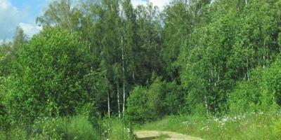 Фотографии и отзывы о коттеджном поселке «Кубинский лес» (Одинцовский р-н МО)