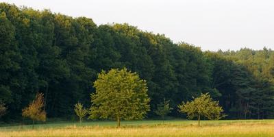 Фотографии и отзывы о коттеджном поселке «Живописный лес» (Ступинский р-н МО)