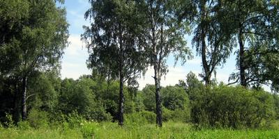Фотографии и отзывы о коттеджном поселке «Шиколово» (Можайский р-н МО)