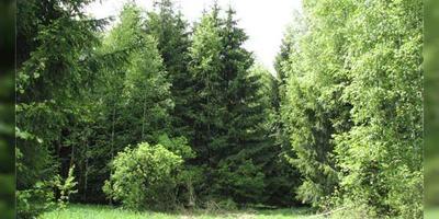 Фотографии и отзывы о коттеджном поселке «Ермолинский Лес» (Дмитровский р-н МО)
