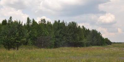 Фотографии и отзывы о коттеджном поселке «Карповские дачи» (Раменский р-н МО)