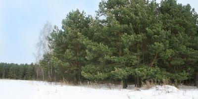 Фотографии и отзывы о коттеджном поселке «Зеленая стрела» (Раменский р-н МО)