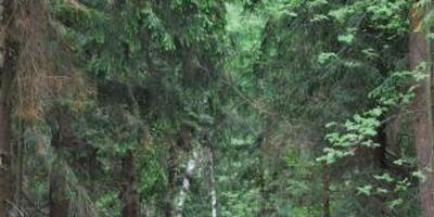 Фотографии и отзывы о коттеджном поселке «Лесная слобода» (Наро-Фоминский р-н МО)