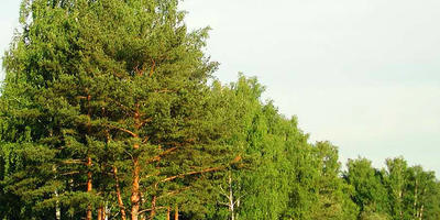 Фотографии и отзывы о коттеджном поселке «Сосновый дом» (Орехово-Зуевский р-н МО)