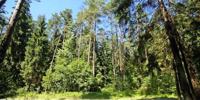 Фотографии и отзывы о коттеджном поселке «Вымпел» (Красногорский р-н МО)