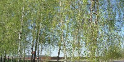 Фотографии и отзывы о коттеджном поселке «Черничные поля» (Наро-Фоминский р-н МО)