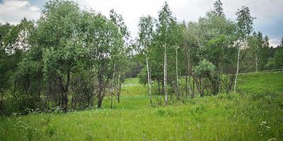 Фотографии и отзывы о коттеджном поселке «Родничок» (Ногинский р-н МО)