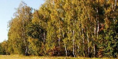 Фотографии и отзывы о коттеджном поселке «Нефедьево» (Ступинский р-н МО)