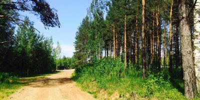 Фотографии и отзывы о коттеджном поселке «Приладожский» (Кировский р-н ЛО)