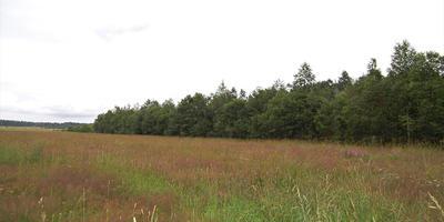 Фотографии и отзывы о коттеджном поселке «Вишневское озеро» (Выборгский р-н ЛО)