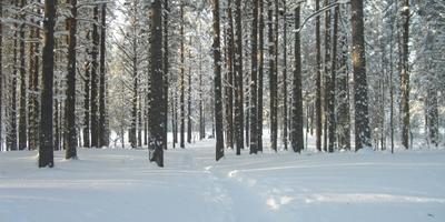 Фотографии и отзывы о коттеджном поселке «Жемчужина Карелии» (Приозерский р-н ЛО)