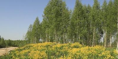 Фотографии и отзывы о коттеджном поселке «Пухолово» (Кировский р-н ЛО)