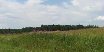 Фотографии и отзывы о коттеджном поселке «Золотая Роща» (Выборгский р-н ЛО)