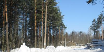 Фотографии и отзывы о коттеджном поселке «Сосны» (Всеволожский р-н ЛО)