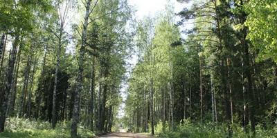 Фотографии и отзывы о коттеджном поселке «Коркинское» (Всеволожский р-н ЛО)
