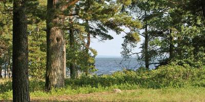 Фотографии и отзывы о коттеджном поселке «NIRVANA» (Курортный р-н ЛО)