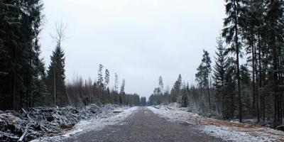 Фотографии и отзывы о коттеджном поселке «Савоя» (Всеволожский р-н ЛО)