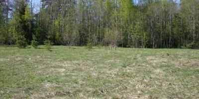 Фотографии и отзывы о коттеджном поселке «Лехтуси» (Всеволожский р-н ЛО)