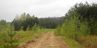 Фотографии и отзывы о коттеджном поселке «Киимаярви» (Приозерский р-н ЛО)