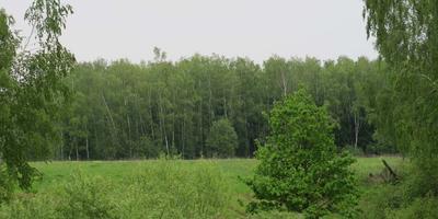 Фотографии и отзывы о коттеджном поселке «Александрово парк» (Можайский р-н МО)