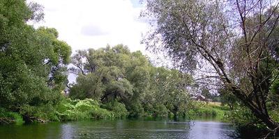 Фотографии и отзывы о коттеджном поселке «Малиновка» (Чеховский р-н МО)