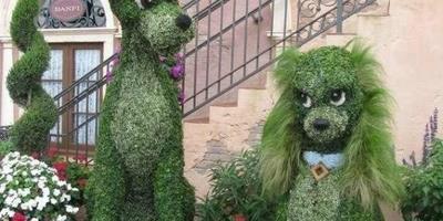 Клумба - Леди и Бродяга