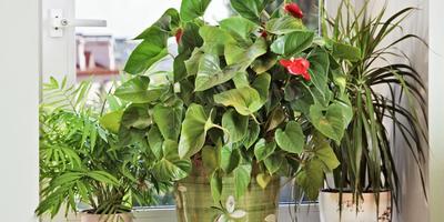 16 самых популярных растений для окон юго-запада, востока и запада для кухни