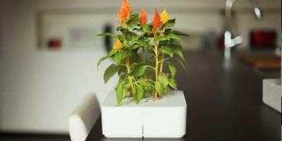 Click & Grow: электроника в садоводстве