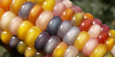 14 самых необычных и красивых овощей