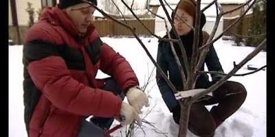 Весенняя обрезка деревьев, кустарников и цветов - подборка видео